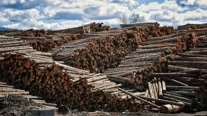 WARKENTIN CONCERNED BY NEW DUTIES ON SOFTWOOD