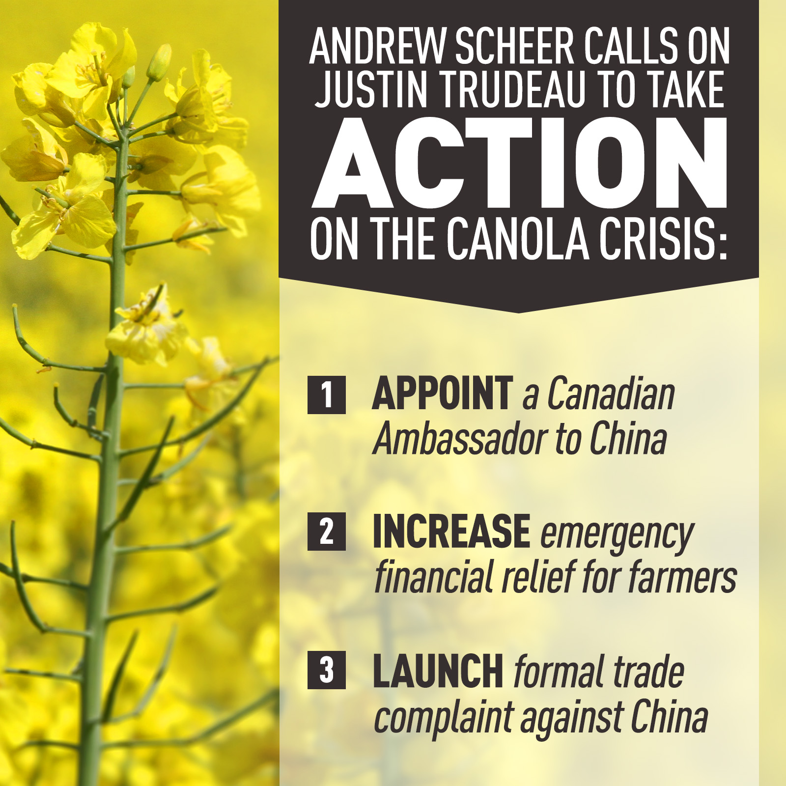 CONSERVATIVES SET OUT PLAN FOR SOLUTION TO CANOLA CRISIS