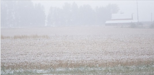 ALBERTA MEMBERS OF PARLIAMENT MEET TO ASSIST FARMERS STRUGGLING WITH HARVEST STALLED BY EARLY SNOW